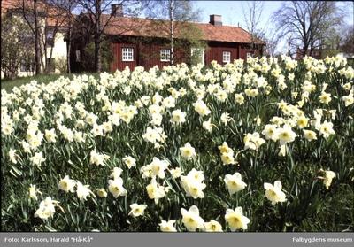 Planteringsförbundets park, Kavlåstugan