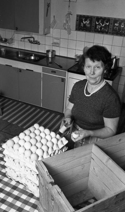 Hästnäs, Mamma fick belönade  20 januari 1966  På bilden syns en kvinna som håller ett ägg i sin vänstra hand och i sin högra hand håller hon i en borste för att kunna polera äggen. Kvinnan är klädd i en klänning med förkläde och har pärlhalsband runt sin hals.  I bildens bakgrund syns köksutrustning med spis, ugn , diskbänk och vattenkran samt skåp. I förgrunden syns trälådor samt äggkartonger fyllda med ägg.