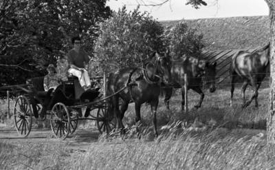 Hästdroska, 3 juli 1967  En kvinna i glasögon, mörk tröja, vita byxor och sandaler på fötterna kör en hästdroska. I droskan sitter en pojke i yngre tonåren klädd i blommig tröja.