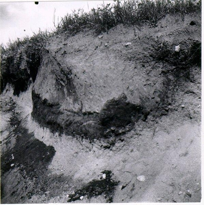 Runsten vid Gärdet, Skånum. Runstenen efter restaureringen. Drakslinga löper runt stenen ett kors ristat emellan denna texten omtalar att Gudmund reste denna sten efter Eskil ?sin bror. Han trodde på Gud.