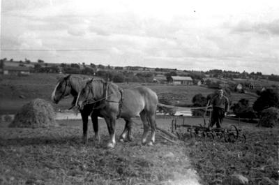 Hästar med harv.
