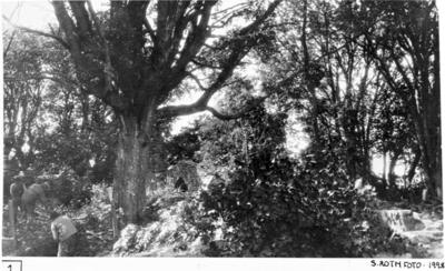 Terängen över södra koret och mittkoret vid utgrävningarnas början. Från öster. Längst t.h. östligaste delen av  södra korets norra mur.