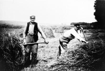 Axel Sköld och Artur Karlén stäcker hö.