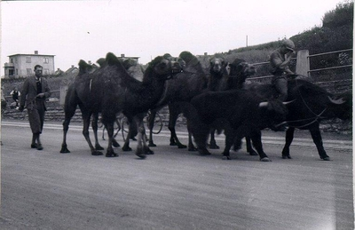 Cirkus passerar Gamla Dotorpsvägen 8.