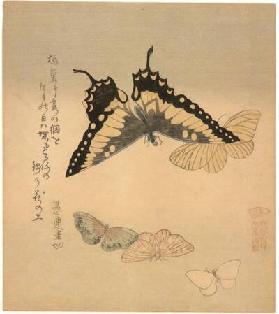 Fünf Schmetterlinge (vom Bearbeiter vergebener Titel)