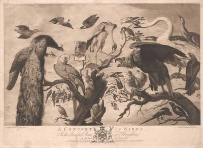 Vogelkonzert, herausgegeben von John Boydell, nach Mario Nuzzi (vom Bearbeiter vergebener Titel)