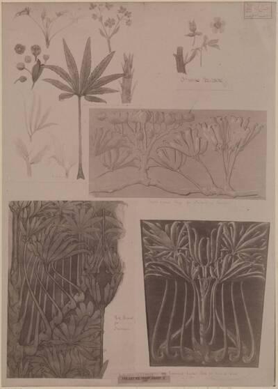 Fotografie eines Entwurfes für Pflanzenstudien und deren Anwendungen, von Ralph Greysmith (vom Bearbeiter vergebener Titel)