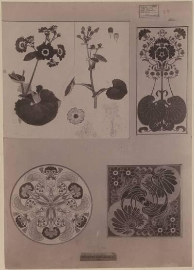 Fotografie eines Entwurfes für Pflanzenstudien und deren Anwendungen, von Walter Taylor (vom Bearbeiter vergebener Titel)