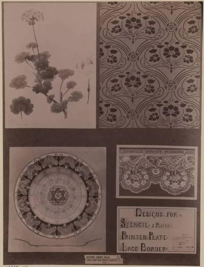 Fotografie eines Entwurfes für Pflanzenstudien und deren Anwendungen (vom Bearbeiter vergebener Titel)