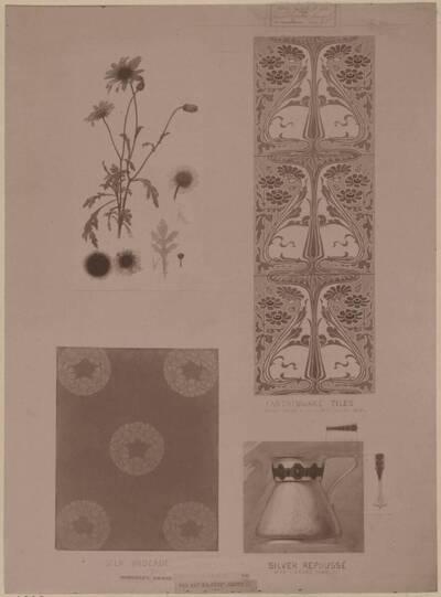 Fotografie eines Entwurfes für Pflanzenstudien und deren Anwendungen, von Harry G. Theaker (vom Bearbeiter vergebener Titel)
