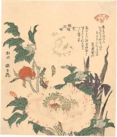 Päonien und Schwertlilien (Botan, Kakitsubata 牡丹 燕子花)