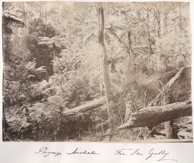 Rumänisches Album: Australische Landschaft (Urwald), The Gully