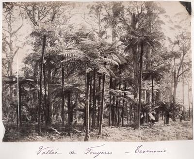 Rumänisches Album: Tal von Fougères in Tasmanien
