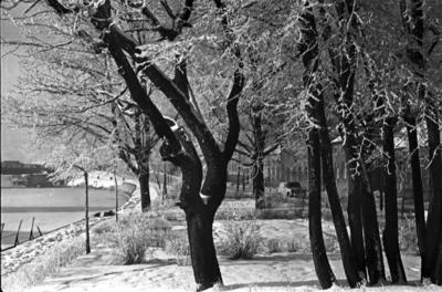 Klaipėda. Skveras prie Danės žiemą / Bernardas Aleknavičius