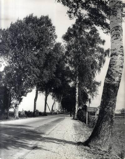 Ievos Simonaitytės motinos sodinti beržai. Pavienė nuotrauka / Bernardas Aleknavičius. - 1900