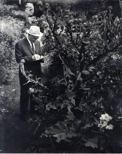 Rašytojas Juozas Baltušis. Pavienė nuotrauka / Bernardas Aleknavičius. - 1969.VII.22