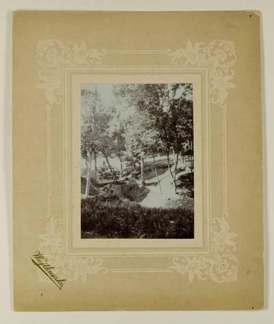 Kosakovskių šeimos archyvas. 7 : Ikonografija. - 1790-[1919]. 1732 : [Vaitkuškio dvaro parko vaizdai] / fotogr. Stanislovas Kazimieras Kosakovskis. - 189-