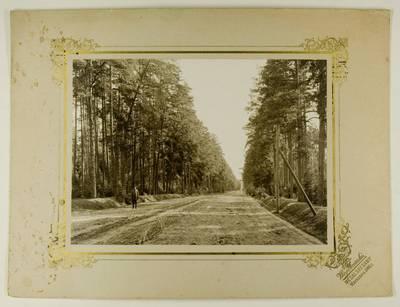 Kosakovskių šeimos archyvas. 7 : Ikonografija. - 1790-[1919]. 1741 : [Kelias per mišką / fotogr. Stanislovas Kazimieras Kosakovskis. - 1901
