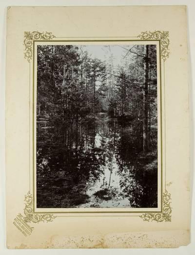 Kosakovskių šeimos archyvas. 7 : Ikonografija. - 1790-[1919]. 1742 : [Gamtovaizdžio nuotrauka] / fotogr. Stanislovas Kazimieras Kosakovskis. - 1901