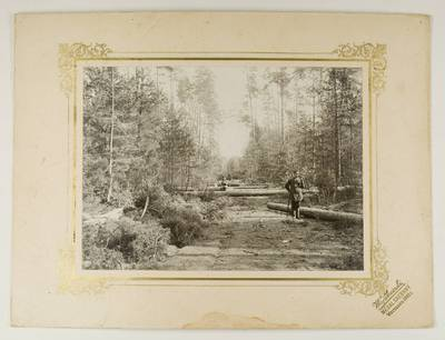 Kosakovskių šeimos archyvas. 7 : Ikonografija. - 1790-[1919]. 1743 : [Miško kirtimas / fotogr. Stanislovas Kazimieras Kosakovskis. - 1901