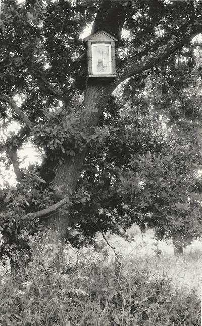 Alfonso Beresnevičiaus sakralinio meno fotografijos kolekcija. Ikonografija. Koplytėlės. [Koplytėlė pakabinta medyje, prie kelio Staneliai-Kantaučiai, netoli Stanelių / fotografuota Alfonso Beresnevičiaus 1992 m. vasarą]. - 1992