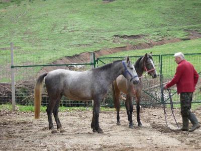 Treniranje konj