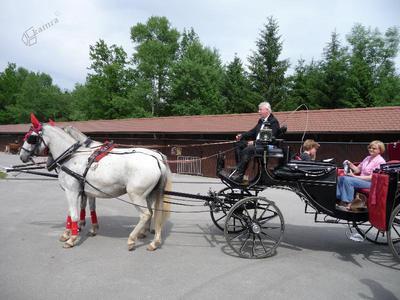 Lojze Potočnik na eni od svojih kočij