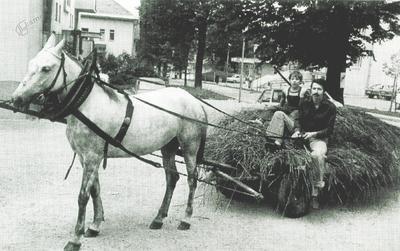 Kmečki voz, naložen s svežo krmo