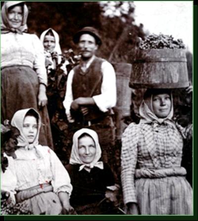 Družina Šket pri delu v vinogradu, posneta ok. 1910