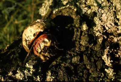 Drevesno deblo