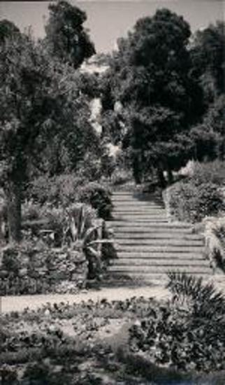 American School of Classical Studies at Athens. Garden.