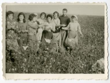Συγκομιδή βαμβακιού στο χωριό Νησέλι