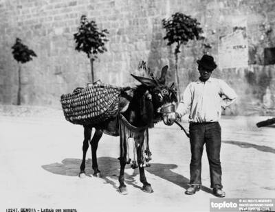 Milk-man with his donkey in