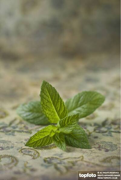 A small sprig of mint
