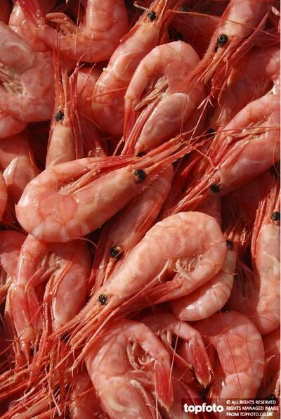 North Atlantic prawns