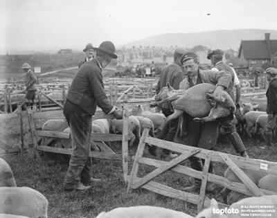 Lewes sheep fair