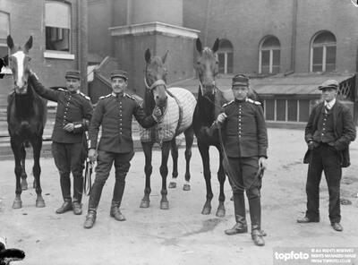 Horses at Olympia