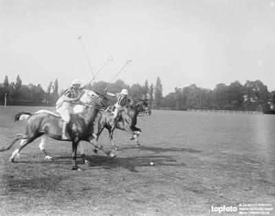 Polo Pony Show at Hurlingham