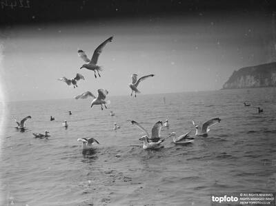 Seagulls quarrelling in the sea
