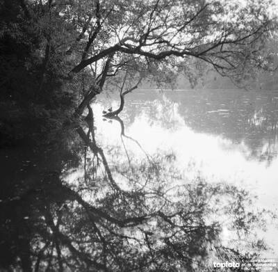A tree overhanging a lake