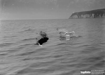 A seagull alighting ._x000D_ 1939