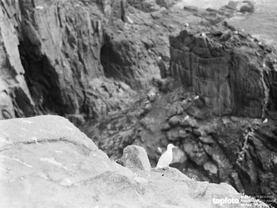 Seagull sits atop a cliffs