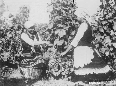 Queens of the Yugoslav grape