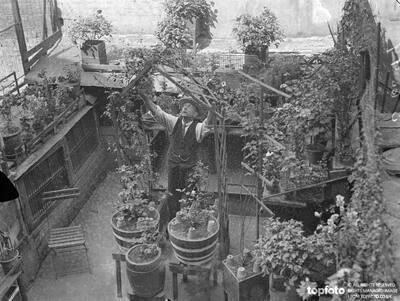 Londoner Grows A Beautiful Garden