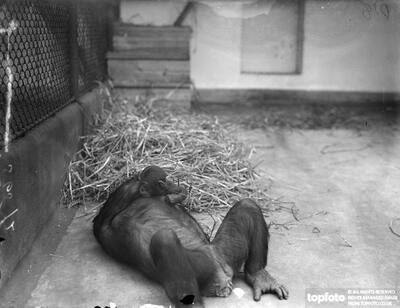 June , Zoo ' s