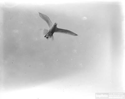Seagull in-flight_x000D_ 1933