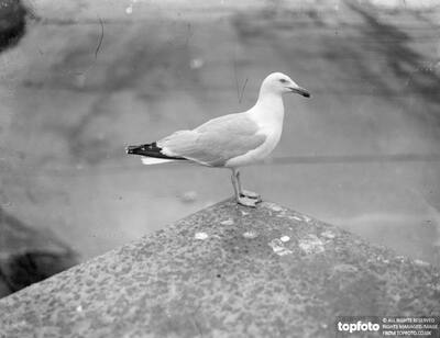 Seagull_x000D_ 1933